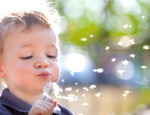 Pollenflug-Saison gestartet